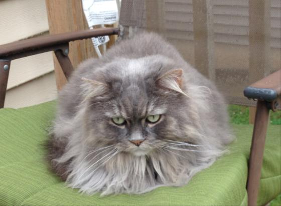 Nomar The Cat Is Missing. Middle #Sackville. Pls Share!